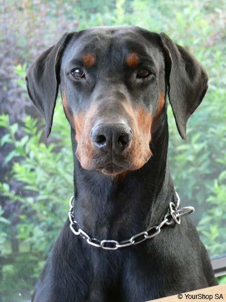 Morgan Dog Name